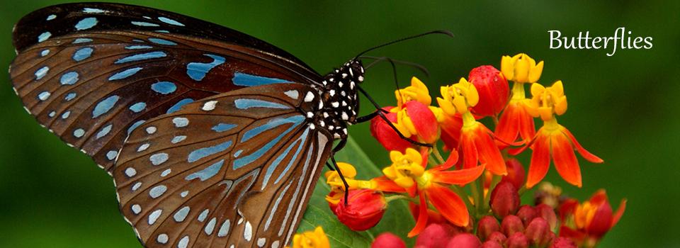 Butterflies-Slider-Brendan-White-Jewelry-Designs
